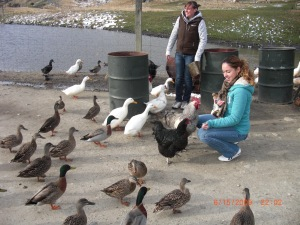 More Animal feeding in New Zealand 2009!
