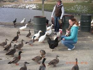 More Animal feeding in New Zealand 2009!